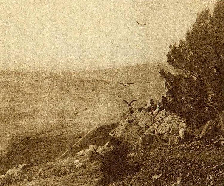 0323 la fete des vautours a sidi m cid